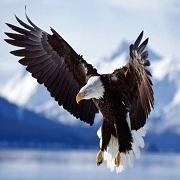 老鹰之歌 El Condor Pasa
