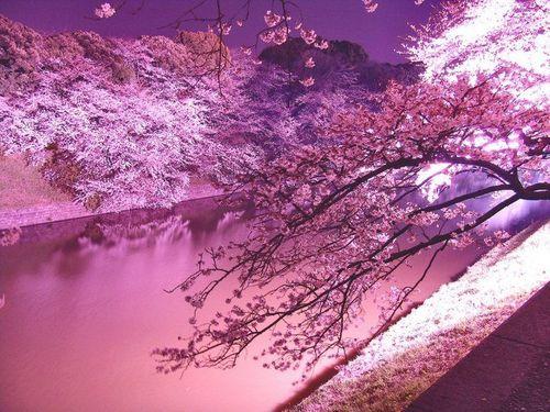 樱花纷飞时 - 中岛美嘉,樱花纷飞时在线试听,纯音乐