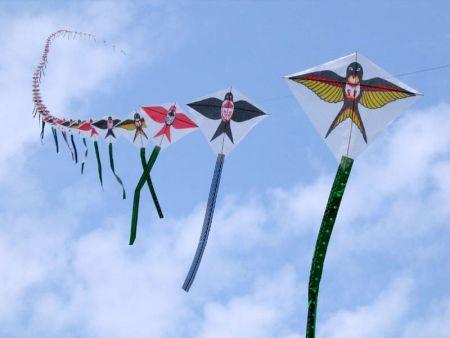 风筝之梦:重阳登高风筝飞舞