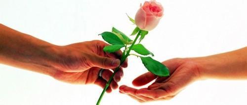 送我一支玫瑰花 琵琶 小提琴