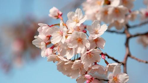 北国之春 葫芦丝