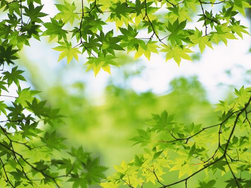 森林狂想曲 竹笛二重奏
