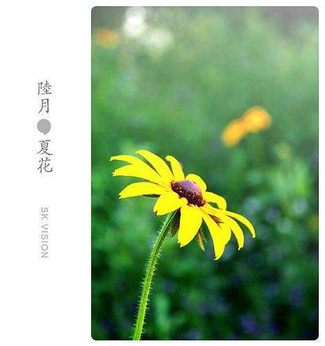 夏に花が散る