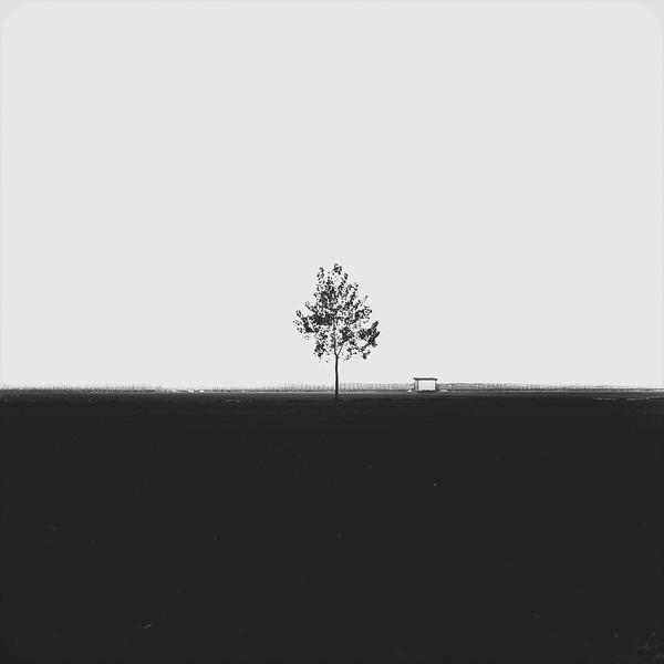 早春的树(致蝶洛、喜雪儿2010)