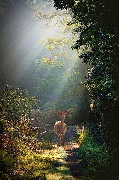 有鹿来 (伴奏)
