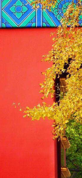 Autumn (秋)