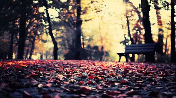 不停的路过,不停的感受,这个秋天又要过去了