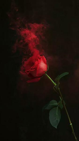 玫瑰的清香(钢琴曲)