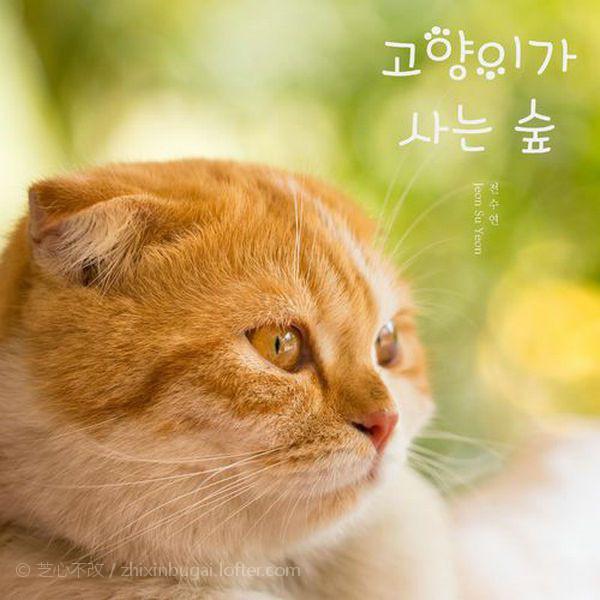 【飘】고양이가 사는 숲/森猫 2020