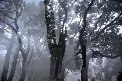 他看见孤独生长于树影婆娑