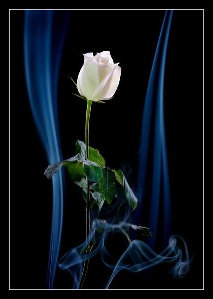 Autumn Rose ( 秋日玫瑰 )