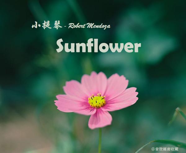 小提琴:《Sunflower》