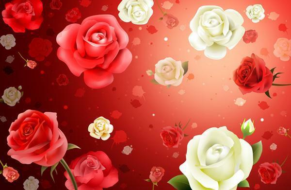 【二胡】红玫瑰与白玫瑰