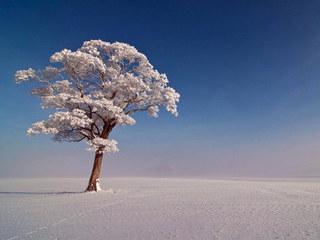 雪风(口哨)