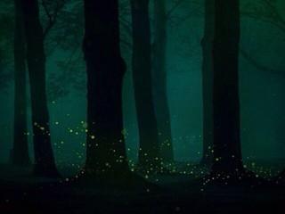 林中的萤火虫