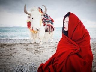 一个人的西藏