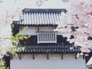 벚꽃비 나리는 정원 下樱花雨的庭院