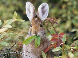 兔子先生(Erhu.Ver)