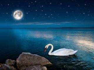 Les fées du lac(湖中的仙女)