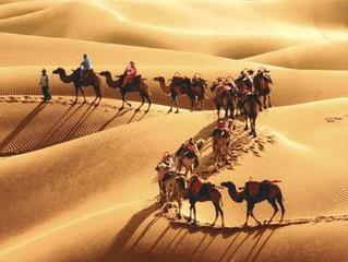 【钢琴】沙漠骆驼