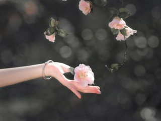 满身花影入梦来