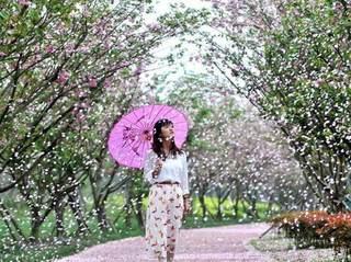 桃花时节樱花雨