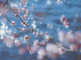 春风拂过的晴天