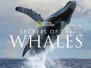 鲸鱼的秘密 纪录片 原声音乐 2021