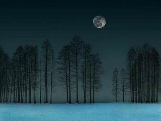 月色雪色之间,你是第三种绝色
